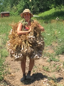 Tamara hauling an impressive load of garlic!